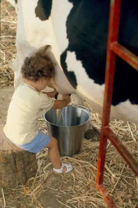 Can you milking 🐄 cows?