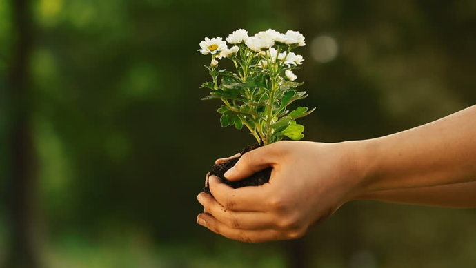 Whats something nice that you did for someone, without expecting anything in return?