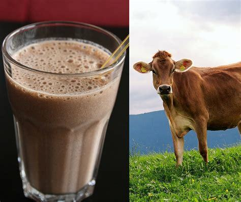 Do you think that chocolate milk comes from chocolate cows?