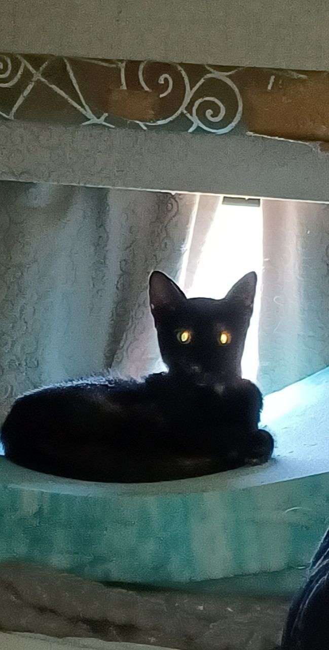 Can you make my black cat look Halloween-y?