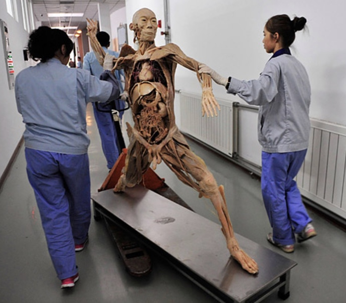Would you have your partner or any part of them plastinated if they died? If they were preserved life like?