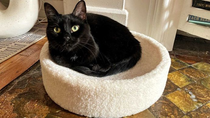 Which pet bed looks the most comfy?