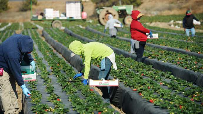 Why are liberals so arrogant to believe that illegal immigrants are only capable of picking their crops and mowing their lawns?