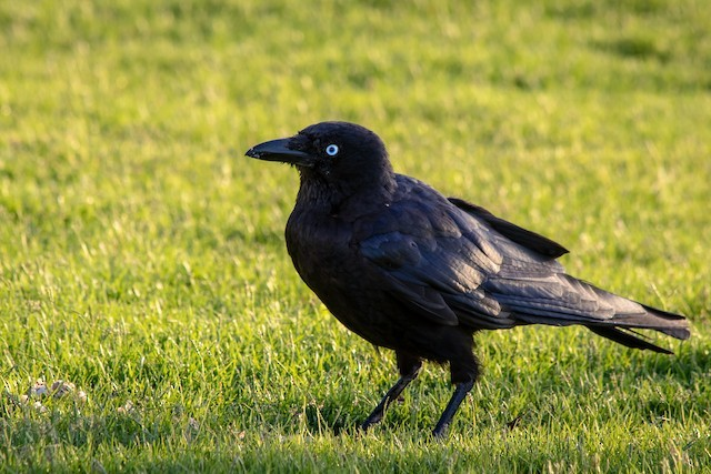 Have you ever been a crow at a raven party before?