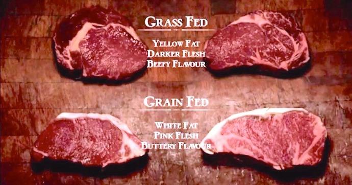 Do you prefer grain or grass fed beef?