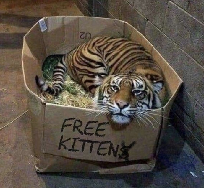 If You Saw This Box & It Said FREE KITTEN Would You Take It Home?