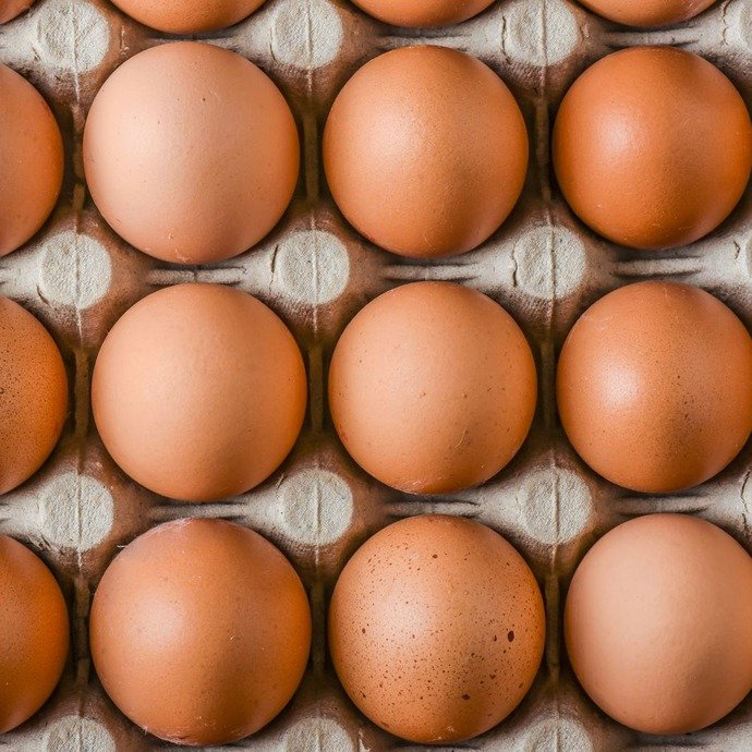 True or False: unless you make eggs youre not a female?